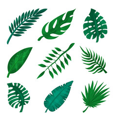 green tropical leaf set palm leaves vector image