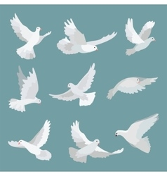 Set white doves peace isolated on background vector