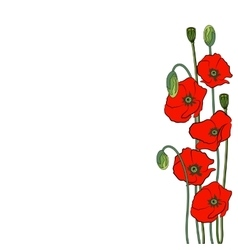 Composition of red poppy flowers isolated on a vector