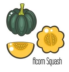 Acorn squash cartoon vector