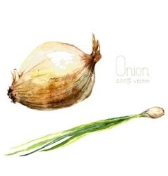Watercolor onion vector image