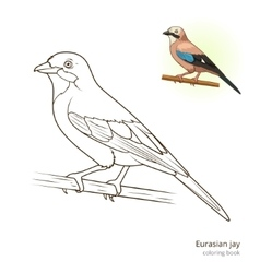 Eurasian jay bird coloring book vector