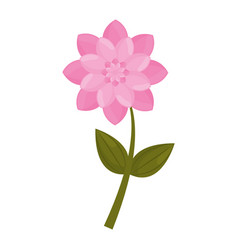 Pink flower stem leaves vector