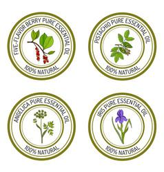 Set of essential oil labels angelica iris vector