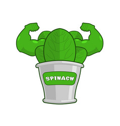 strong spinach tin powerful herbs for muscle vector image