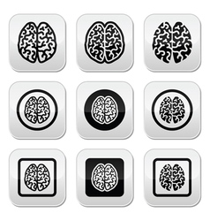 Human brain icons set - intelligence creativity c vector