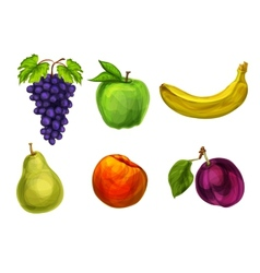 Collection of fresh organic fruits vector image