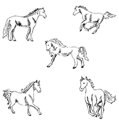 Horses A sketch by hand Pencil drawing vector image
