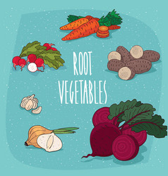 set of isolated clipart edible root vegetables vector image