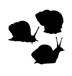Snail silhouette black white icon vector