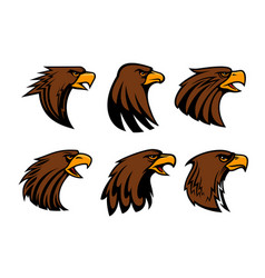 Sport team eagle or hawk bird head vecor mascot vector