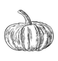 Pumpkin vintage engraving vector