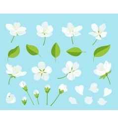 Set of beautiful cherry tree flowers isolated on vector image vector image