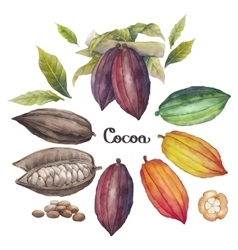 Watercolor cocoa fruit vector