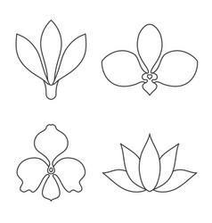 Set of flower line art on white background vector
