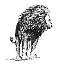 Hand sketch standing lion vector