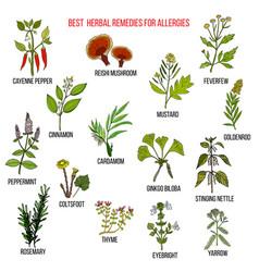 Best herbal remedies for allergies vector