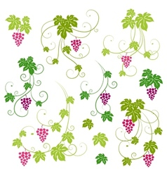 Grape vines set vector