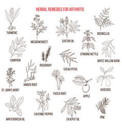 Best herbal remedies for arthriris vector