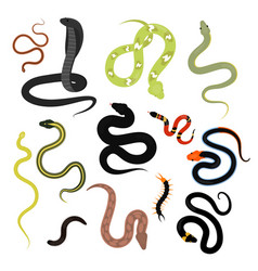 different snake reptile animals cartoon set vector image