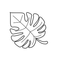 Monstera tropicalplant thin line vector
