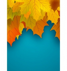 Orange fall maple foliage vector
