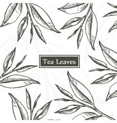Tea leaves design template vector