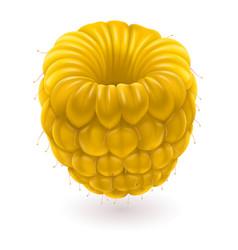 Yellow raspberries on white background for design vector