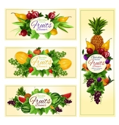 Fruit and berry banner for diet food drink design vector