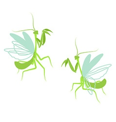Praying mantis Flat drawing of insect on white vector image