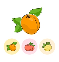 Fruit icons apricot peach melon vector