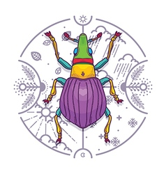 Insect beetle bug design elements line graphic vector