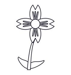 Amaryllis flower natural outline vector