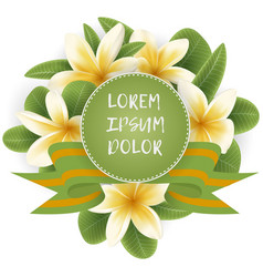 template with plumeria flower wreath vector image vector image