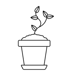 Plant inside pot design vector