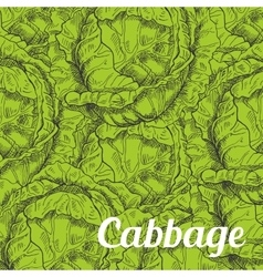 Cabbage vegetable background with leaves vector