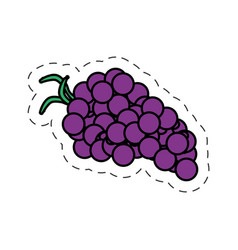 Grape fruit wine ingredient cut line vector
