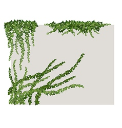 ivy on wall vector image