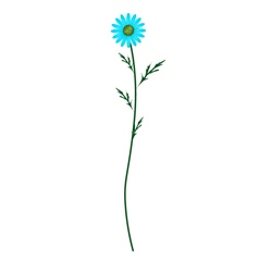 Light Blue Daisy Blossom on White Background vector image vector image