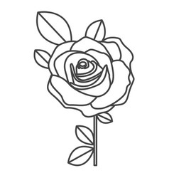 silhouette sketch flowered rose with leaves and vector image