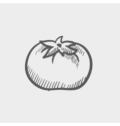 Tomato sketch icon vector