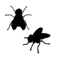 Fly silhouette black white icon vector