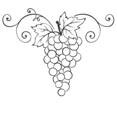 Grape - decorative element vector image vector image