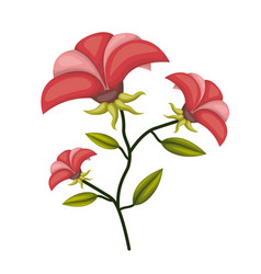 poinsettia flower plant in white background vector image