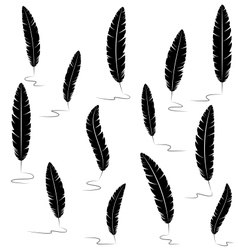 Black writting feathers on white vector image