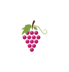 Bunch of wine grapes with leaf icon for food apps vector