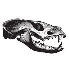 Civet skull vintage vector