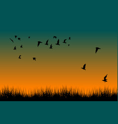 field of grass and silhouettes of flying birds at vector image