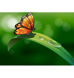 A butterfly above a leaf with water drops vector