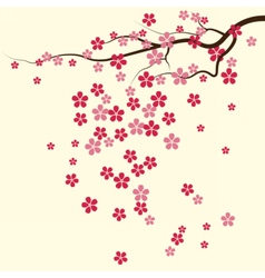 Cherry tree Flowers pattern vector image vector image